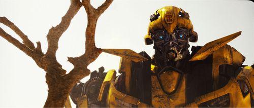 Bumblebee_transformer