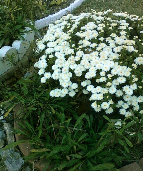 Garden_may_8_2011_5