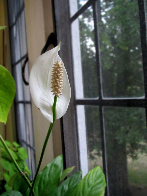 Pretty_flower
